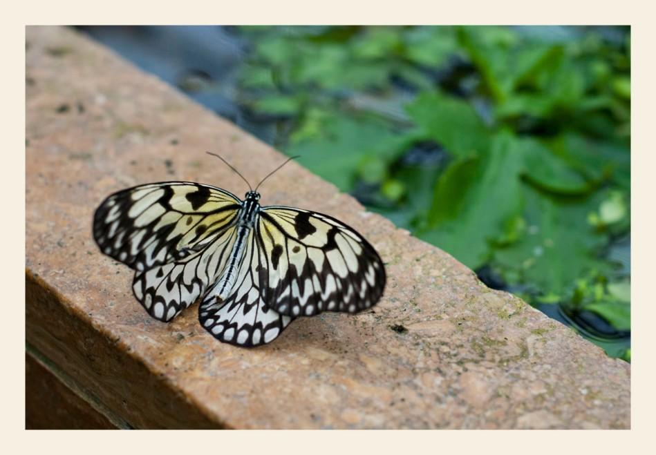Schmetterling Botanischer Garten München